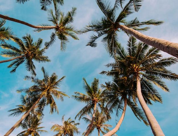 Fondo del concepto del verano de la opinión de perspectiva de las palmeras del coco.