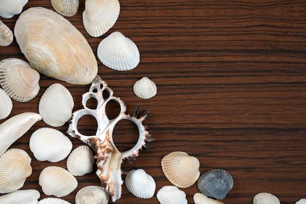 Fondo de conchas de mar en la superficie de madera.