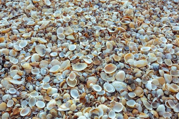 Fondo de conchas de mar