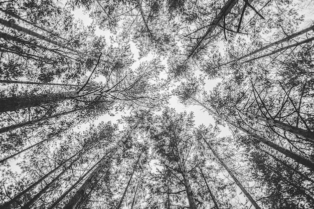Fondo de copas de los árboles en blanco y negro