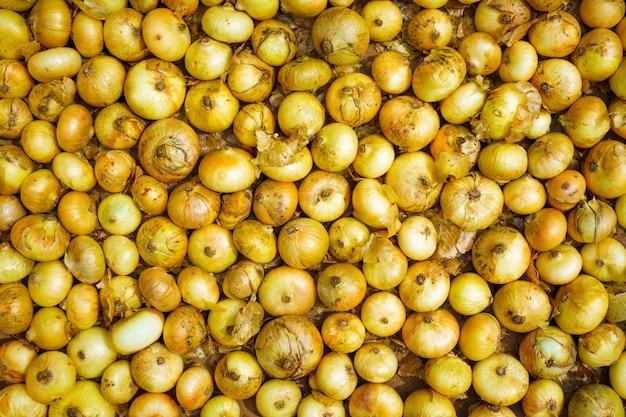 Fondo cosechado de cebolla blanca madura
