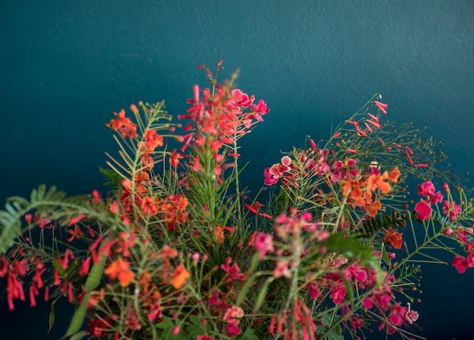 Fondo de hermosas flores de colores de la flor