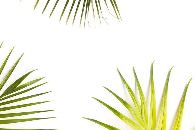 Fondo de hojas tropicales con copia espacio