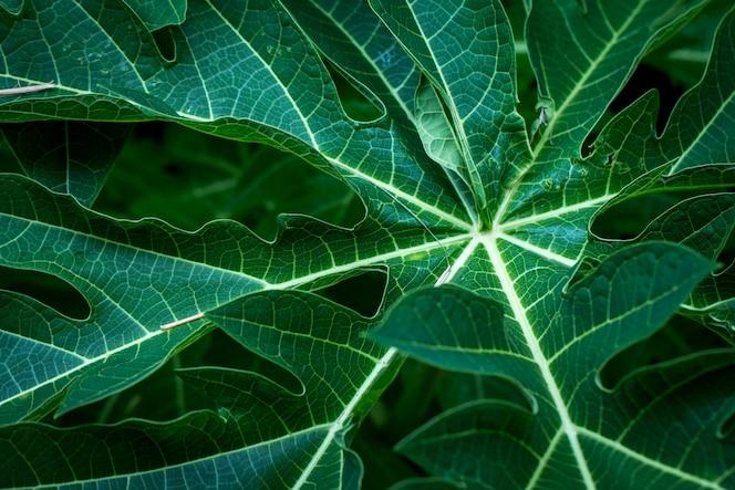 Fondo de hojas tropicales suave imagen enfocada hoja