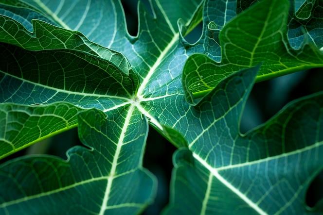 Fondo de hojas tropicales suavemente enfocada imagen de la hoja
