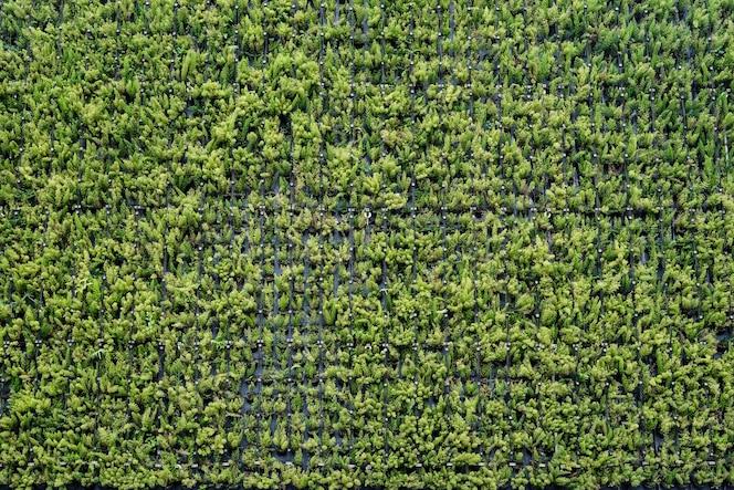Fondo de pared de planta verde en el jardín