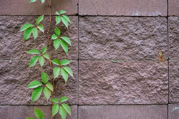 Fondo de decorar la superficie de la pared de piedra de arena.