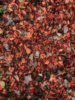 Fondo encantador de hojas de otoño