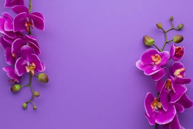 Fondo de espacio de copia violeta con orquídeas