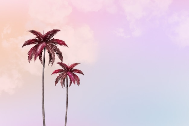 Fondo estético con palmera
