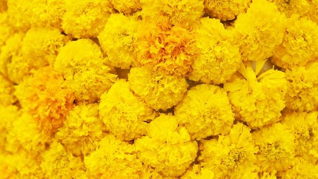 Fondo de flor amarilla de la maravilla