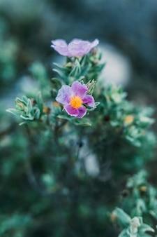 Fondo de flor en naturaleza