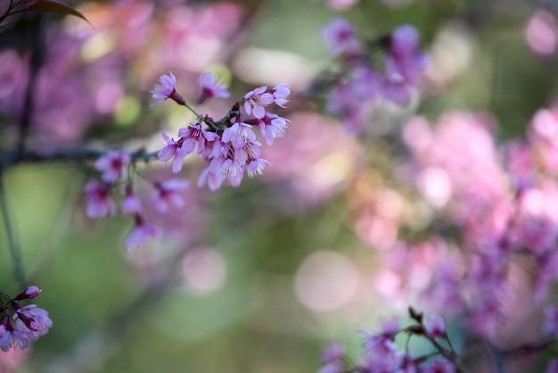 Fondo de flor rosa hermosa