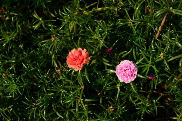 Fondo de la flor