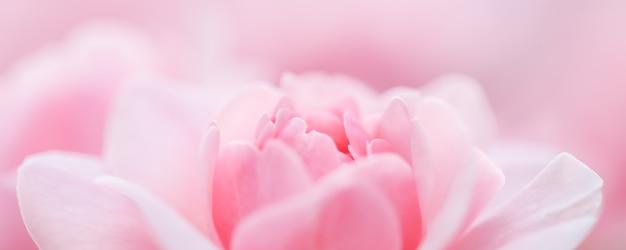 Fondo floral abstracto de enfoque suave rosa rosa flor macro flores telón de fondo para la marca de vacaciones