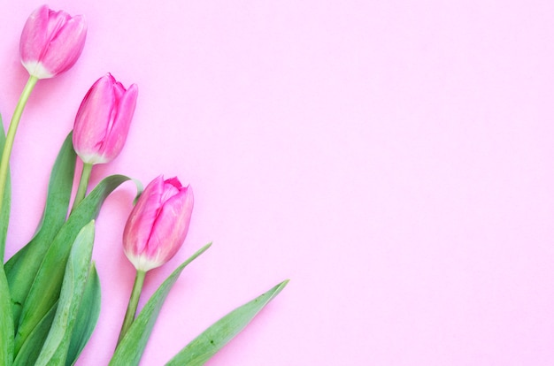 Fondo floral con flores de tulipanes. plano, vista desde arriba. preciosa tarjeta de felicitación con tulipanes para el día de la madre, boda o evento feliz