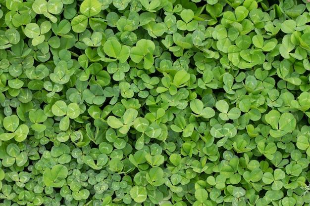 Fondo floral y hojas de trébol