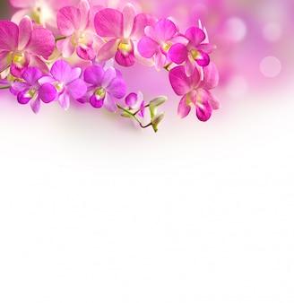 Fondo floral de orquídea rosa y púrpura