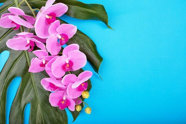 Fondo floral de orquídeas rosadas tropicales con hojas tropicales verdes sobre fondo azul. copia espacio