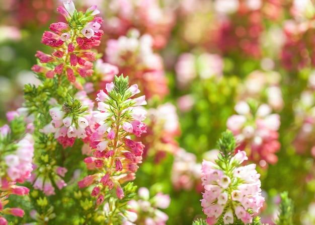 Fondo floral de pequeñas campanas en flor de color rosa y morado