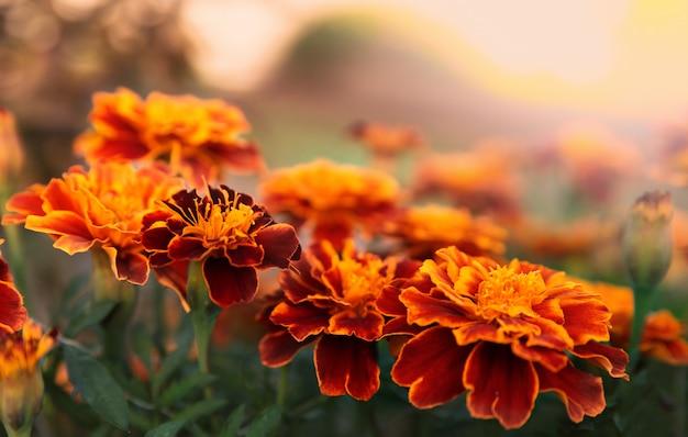 Fondo floral