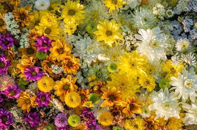 Fondo de flores flores de crisantemo amarillo, blanco y fucsia. vista superior. fondo de vacaciones