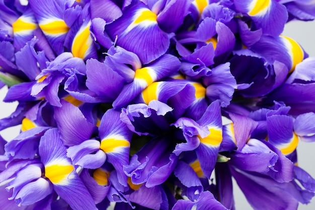 Fondo de flores de iris, patrón floral de primavera.
