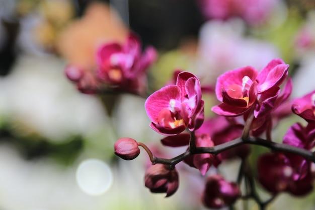 Fondo de flores de orquídeas de primavera