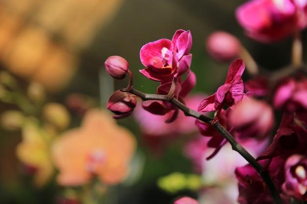 Fondo de flores de primavera orquídea