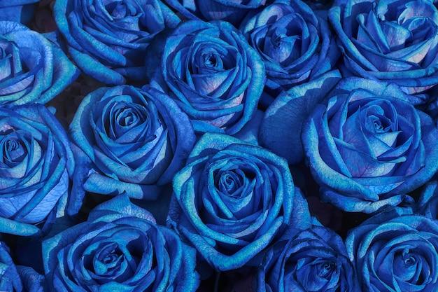 Fondo de flores ramo de rosas azules,.