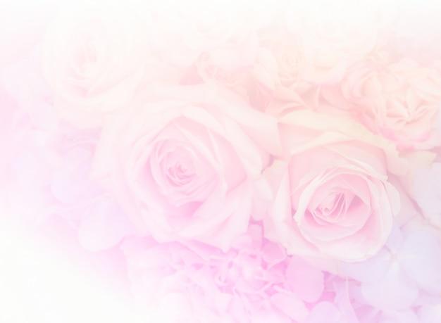 Fondo de flores de rosa rosa suave