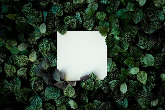Fondo de follaje tropical con tarjeta en blanco