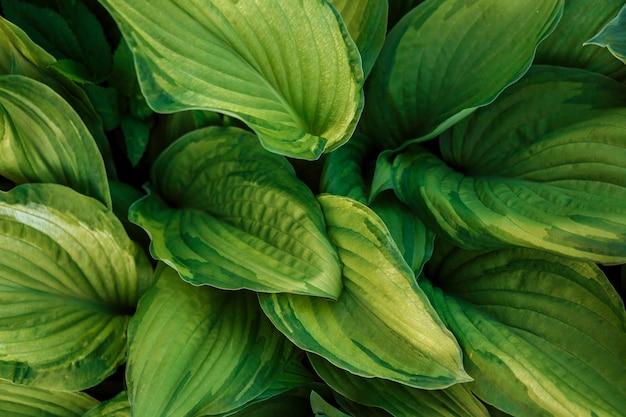 Fondo de follaje verde. vista cercana de hojas verdes.
