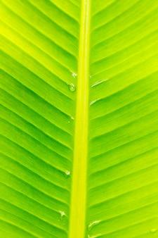 Fondo de foto macro de hoja de plátano