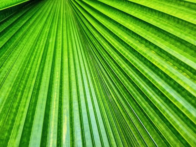 Fondo de fotograma completo de textura de hoja de palma verde con enfoque selectivo