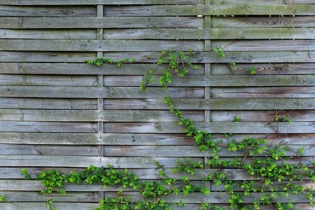 Fondo fresco de una valla de madera de tablón con plantas verdes