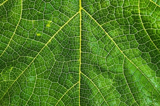 Fondo fresco y verde de la textura de la hoja del árbol para el concepto del día de la tierra del mundo.