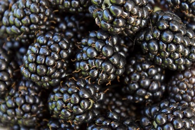 Fondo fresco de las zarzamoras, cierre para arriba porción de bayas crudas de la fruta salvaje jugosa madura que mienten en la tabla.