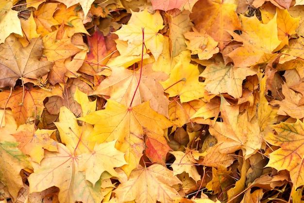 Fondo grupo otoño naranja hojas. al aire libre.