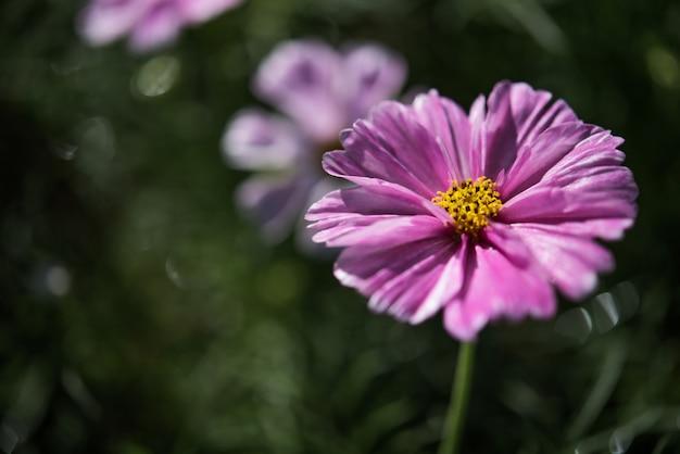 Fondo con hermosas flores púrpuras