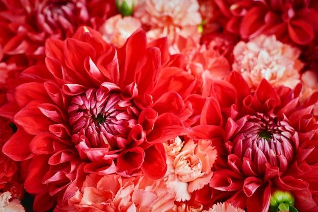 Fondo de hermosas flores rojas. aster flores, enfoque selectivo