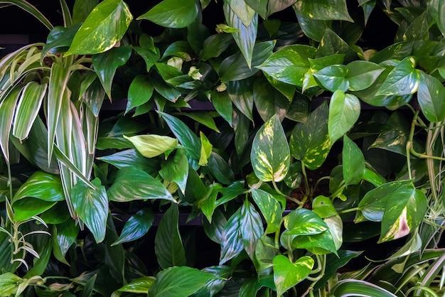 Fondo de hermosas hojas verdes en casa verde tropical