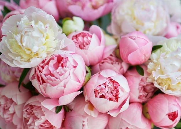 Fondo con hermosas peonías de flores blancas y rosadas.