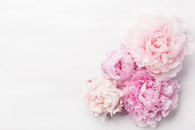 Fondo hermoso de la flor de la peonía rosada