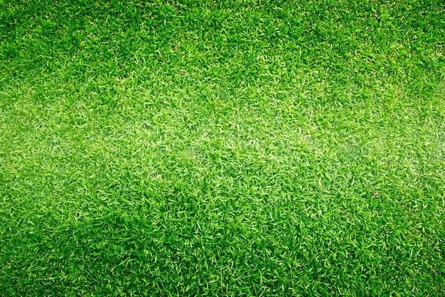 Fondo de hierba campos de golf patrón de césped verde con textura