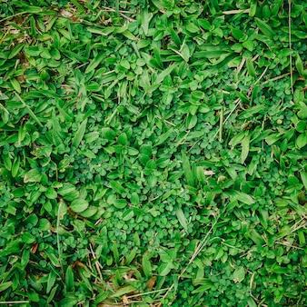 Fondo de hierba verde natural con filtro vintage