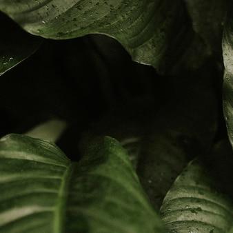 Fondo de hoja oscura estética de la jungla para publicación de instagram