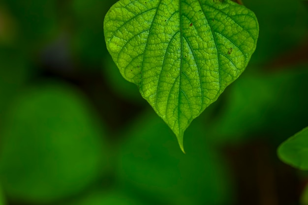 Fondo de hoja verde fresca