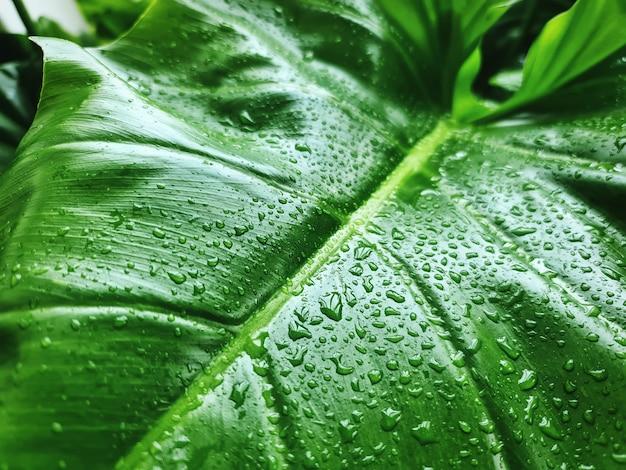 Fondo de hoja verde con gotas de lluvia
