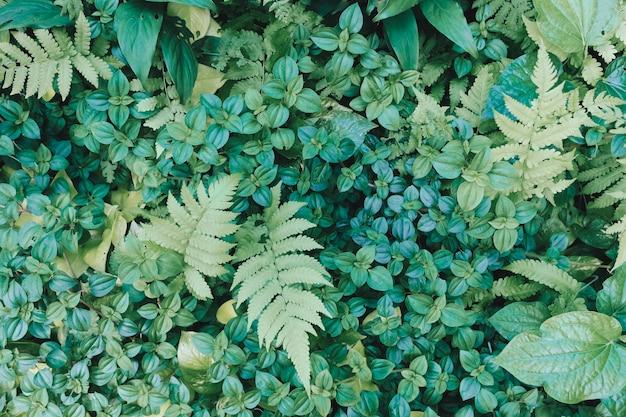 Fondo de hoja verde. hoja verde. fondo de árboles verdes. textura de hoja verde.